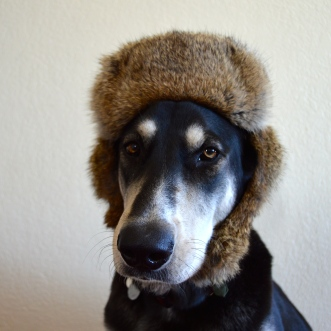 You know you're on the yuppie end of the scale when your dog wears your hats.
