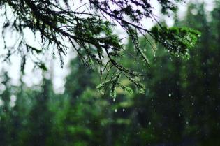 All. The. Rain.